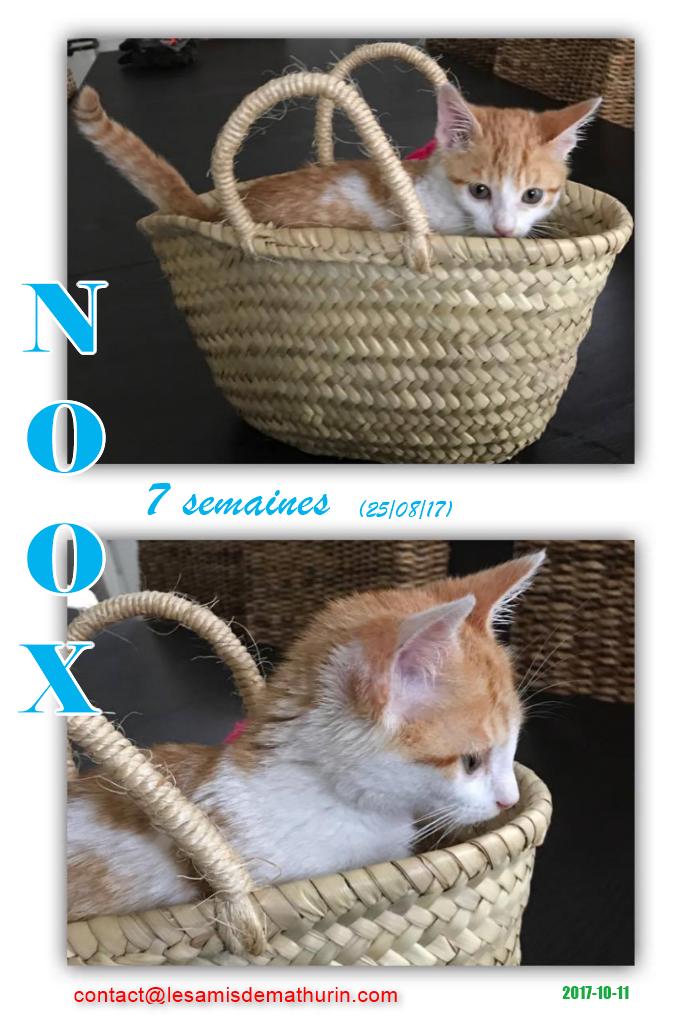 NOOX 01