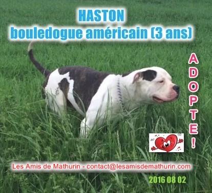 haston adopte 02082016 - site