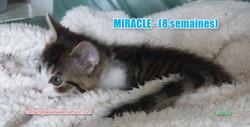 MIRACLE modif 02