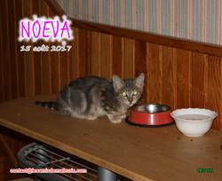 NOEVA 01
