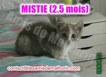 MISTIE Villecresnes 03