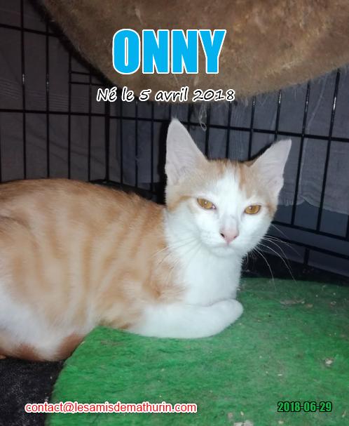 ONNY 03