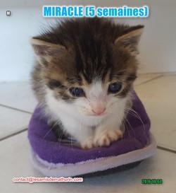 Miracle modif 1