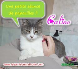 Caline modif 02