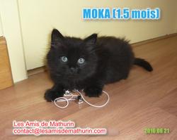 MOKA 3