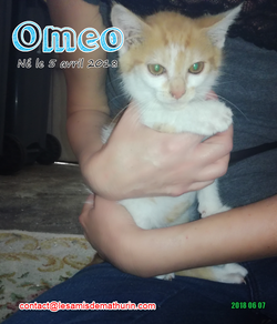 OMEO 01