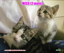 MISS modif 02
