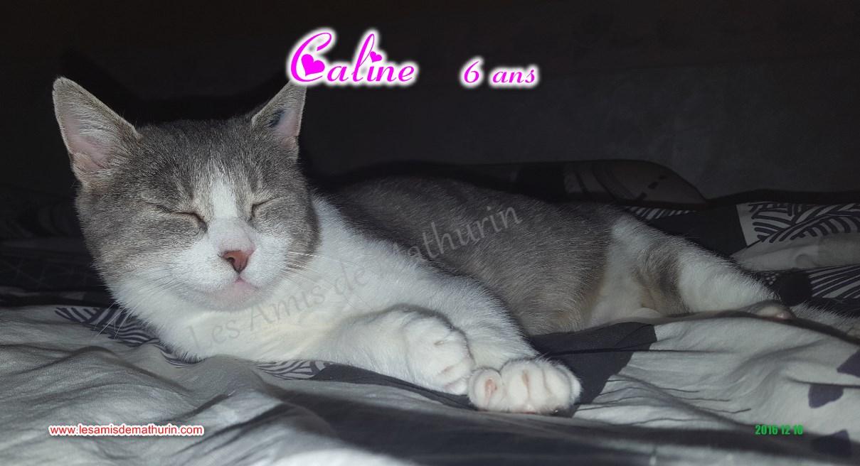 CALINE modif 09