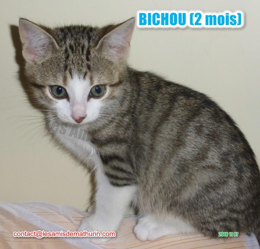 BICHOU modif 13