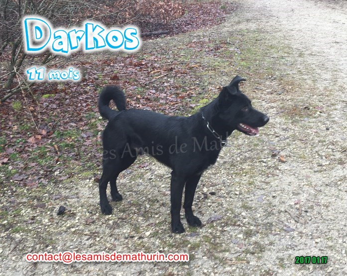 Darkos 02