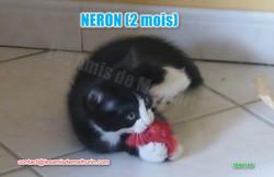 NERON modif 02
