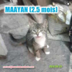 MAAYAN_mâle_Sept1