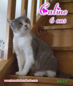 CALINE modif 11