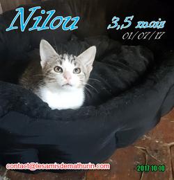NILOU 04