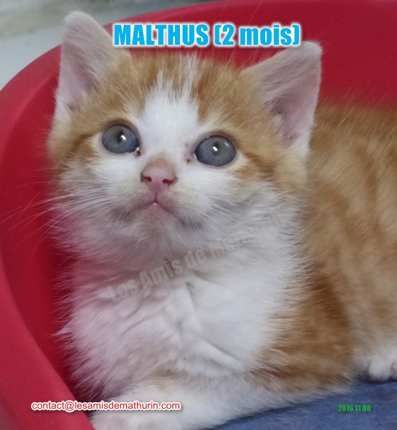 MALTHUS modif 04