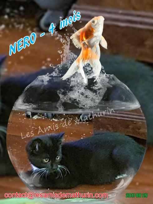 LAM NERO 02
