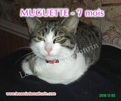 Muguette modif 04