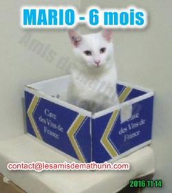 MARIO modif 01