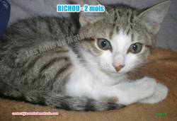 BICHOU modif 07