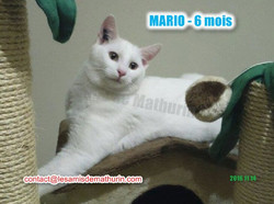 MARIO modif 05