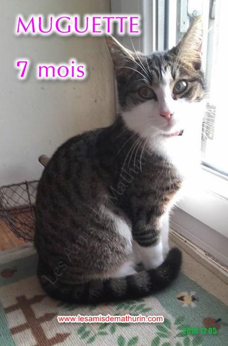 Muguette modif 01