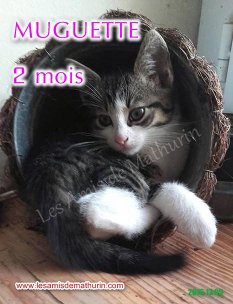Muguette modif 05