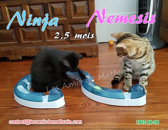 Ninja et Nemesis 01