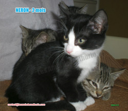 NERON modif 06