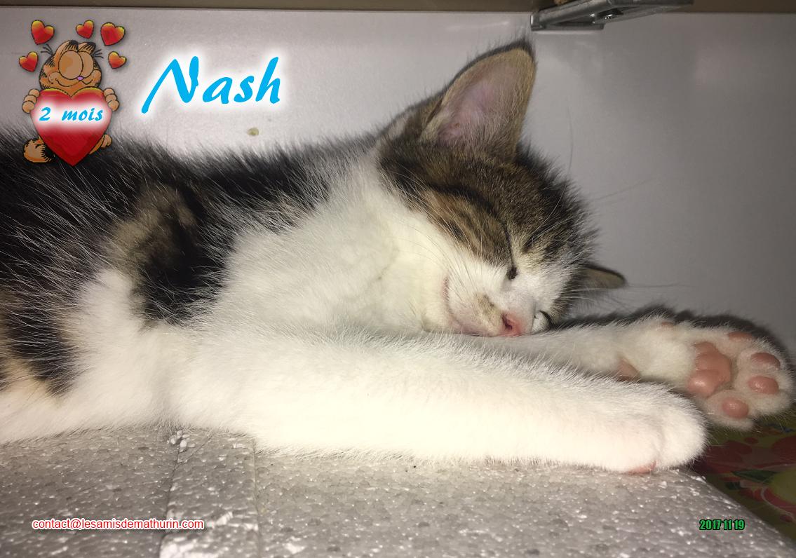 NASH 02