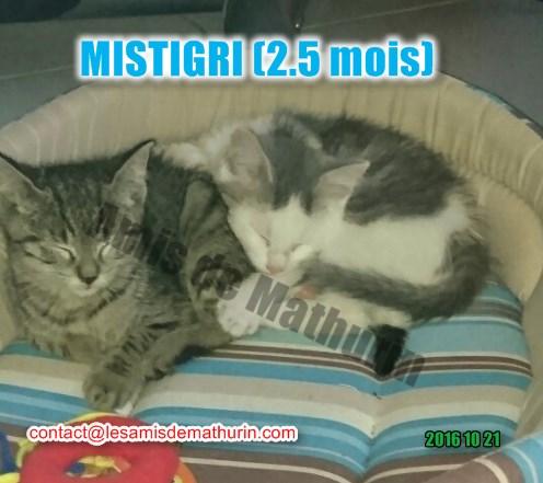 Mistigri 01