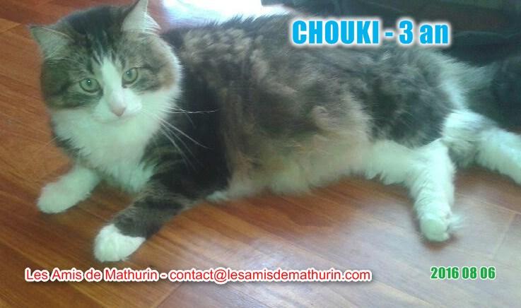 Chouki modif 1