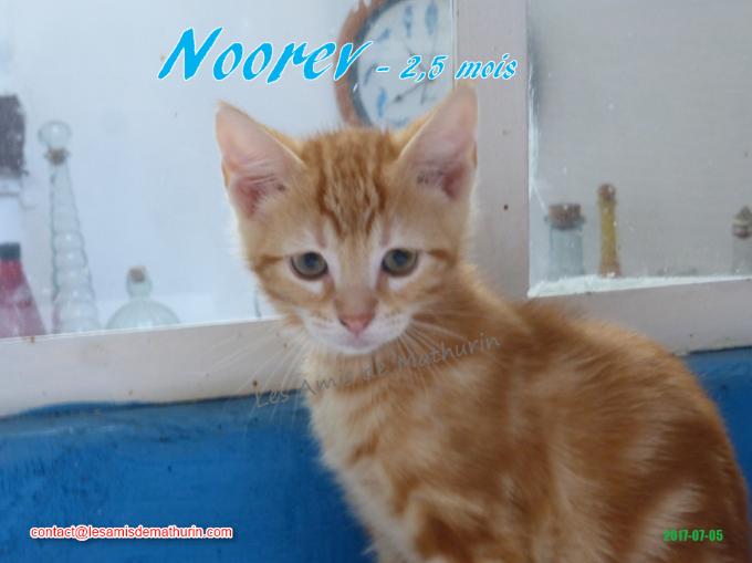 NOOREV 02