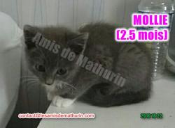 MOLLIE 03