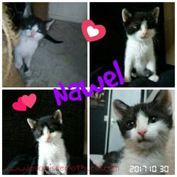 LAMNAWELàl'adoption_Octobre_2017