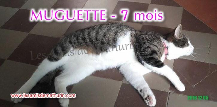 Muguette modif 03