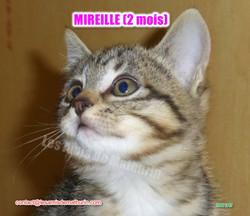 MIREILLE modif 07