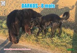 DARKOS LAM 04