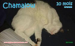 Chamalow 01
