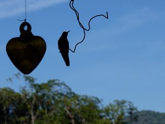 """Hummingbird """"Perched"""""""