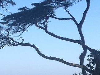 "Arbutus Tree ""Magnificent Nature"""
