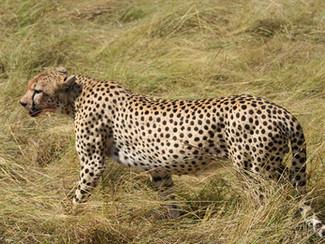 "Africa Safari ""Into the wild"""