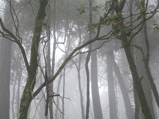 "Sintra ""Royal Mist"""