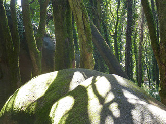 "Tree of Life ""Crann Bethadh"""