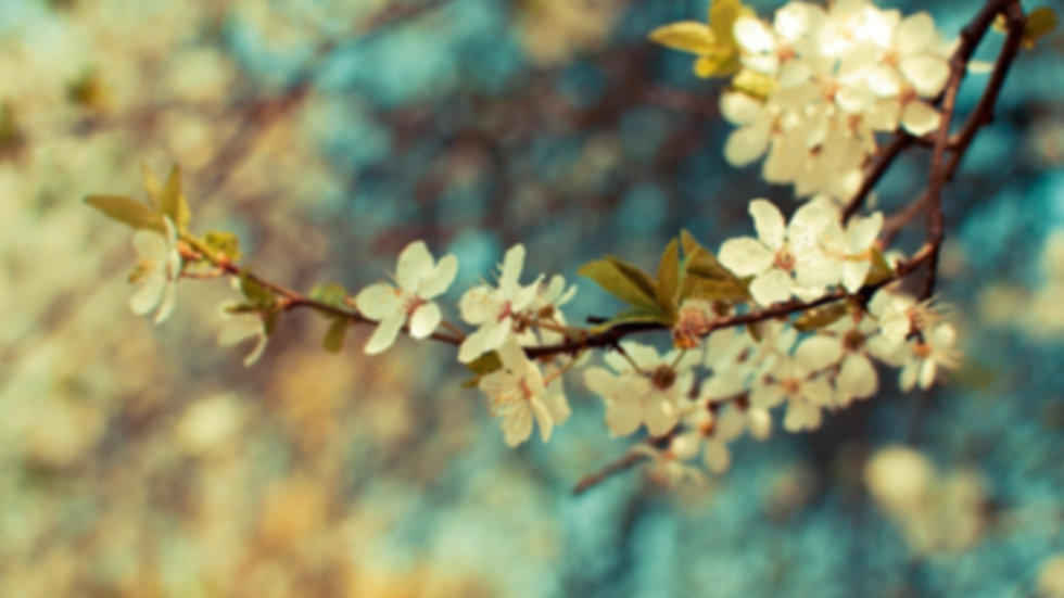 dosagem florais.jpg