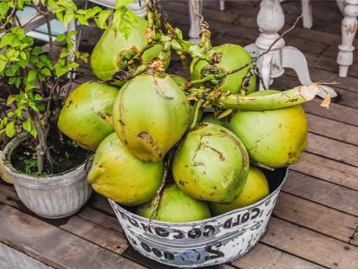 Cocos nucifera - Saiba mais sobre água de côco verde