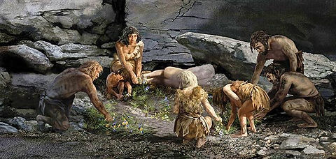 neanderthal origem fitoterapia.jpg