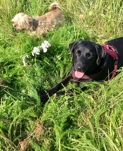 dogs lying next to wild herbs