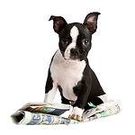 BARF Ernährungsberatung Hunde