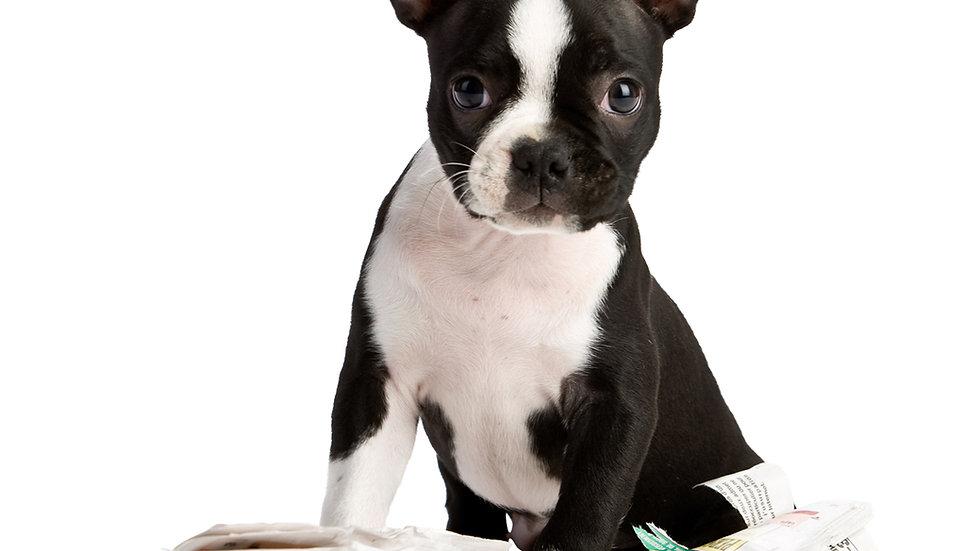 Hundträning Online - Privatlektion