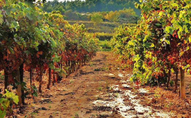 Penedes Wine Region in Spain During Fall